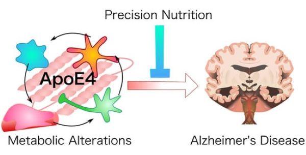 Mục tiêu điều trị mới tiềm năng cho bệnh Alzheimer