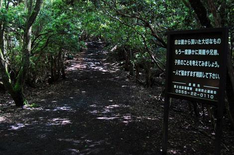"""Bên trong """"rừng quyên sinh"""" ở Nhật Bản"""