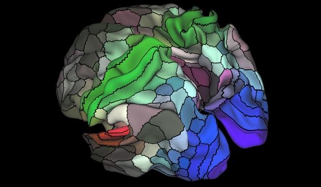 Lập bản đồ não người chi tiết chưa từng thấy